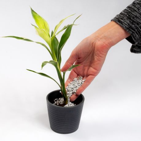 Potstars™ Plant Toppers